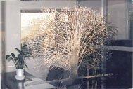 サンドブラスト パーテーション 樹木